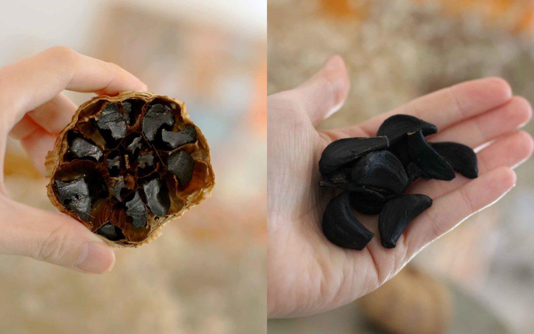 Como fazer alho negro em casa